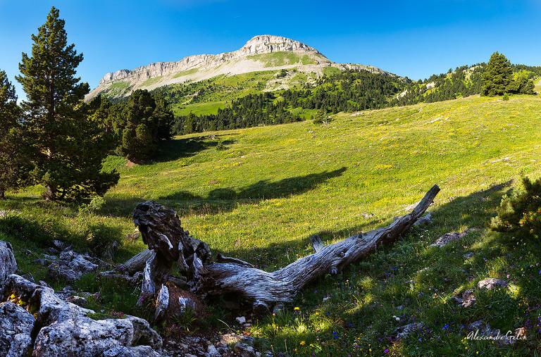 montagnette-combeau-tronc